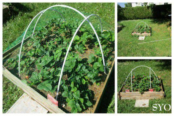 Derniers préparatifs avant plantation au Jardin de Fille