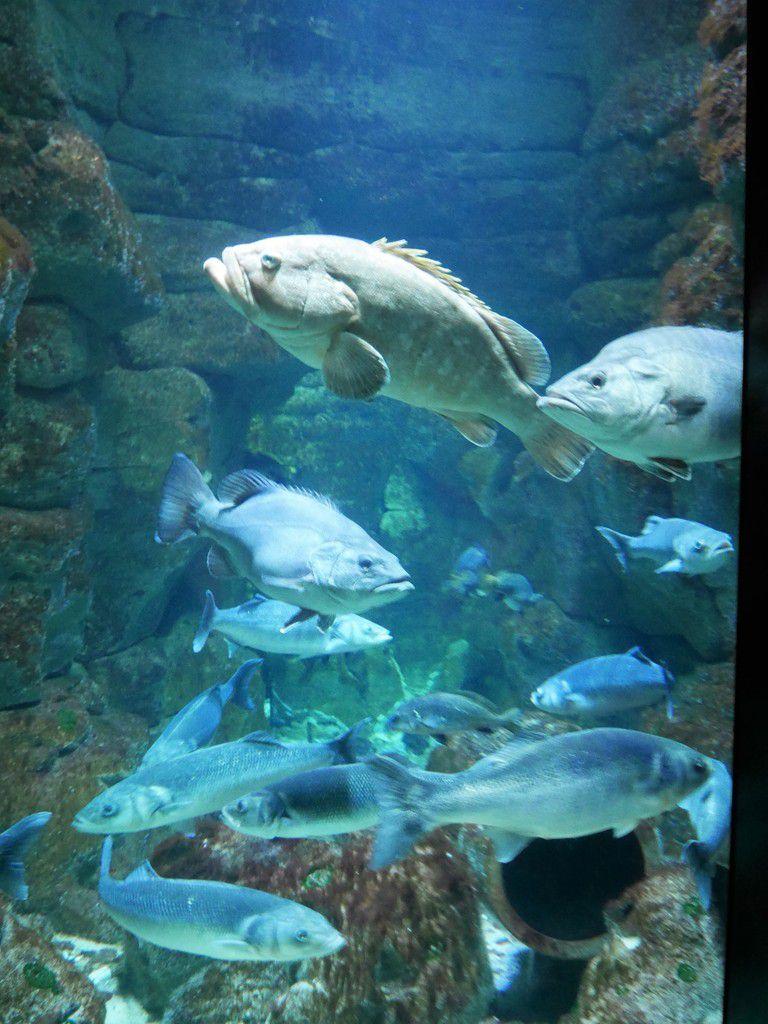 Exposition &quot&#x3B;Corail, coeur de vie&quot&#x3B; à l'Aquarium de Paris