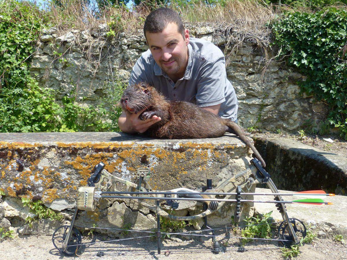 Un gros ragondin faute de chevreuil, 15 juin 2013