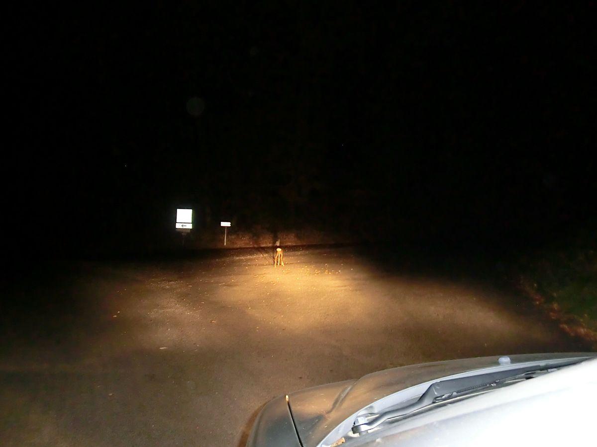 Chasse au cerf en battue dans le Cantal, 22 et 23 octobre 2011