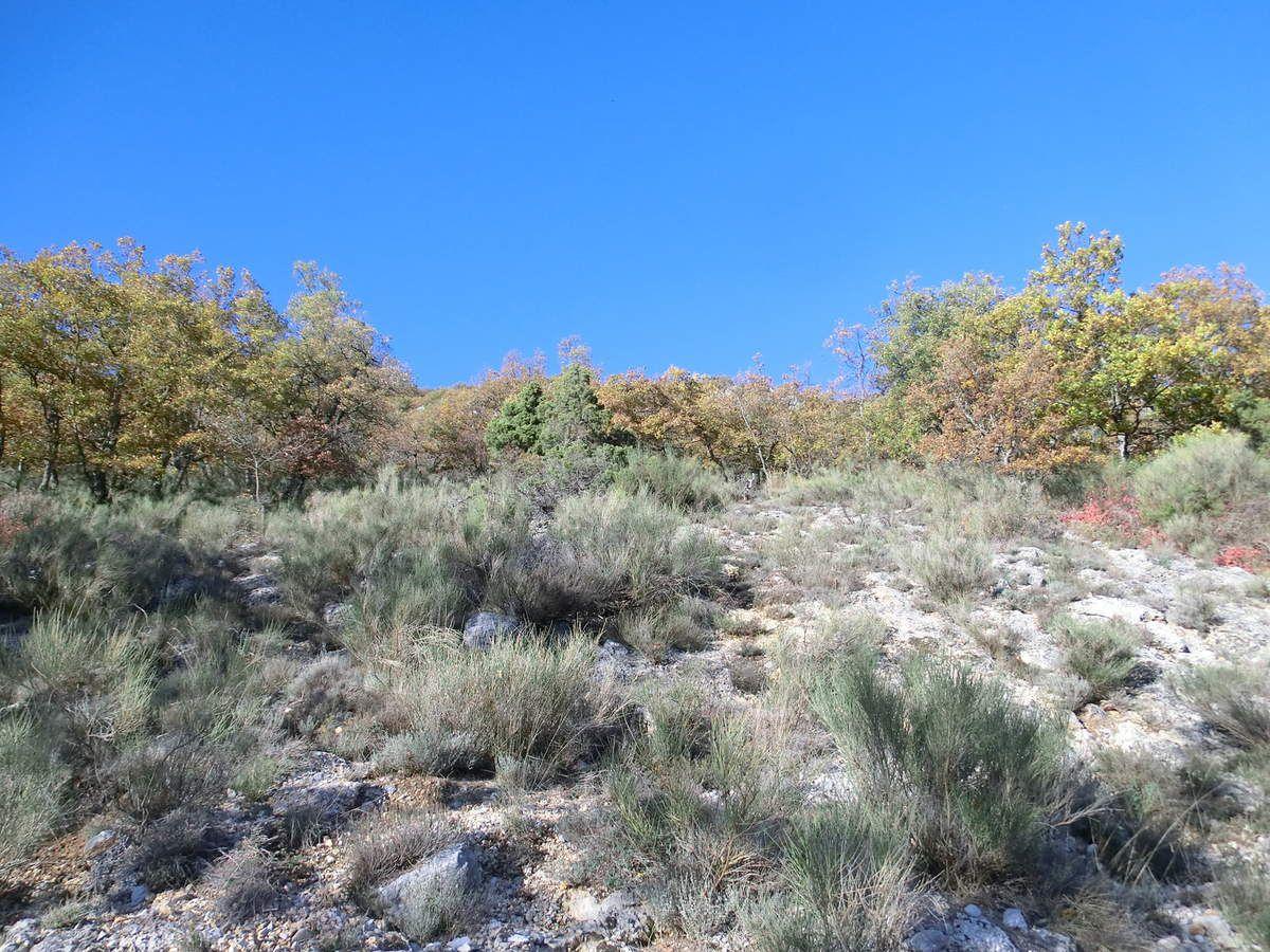 Chronique alpine, mais où sont passés les mouflons ? 12 novembre 2011