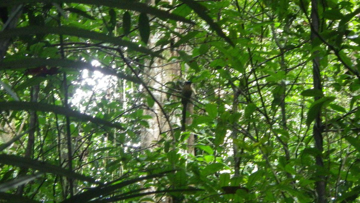 Chroniques guyanaises, première sortie en forêt, 15 mars 2015