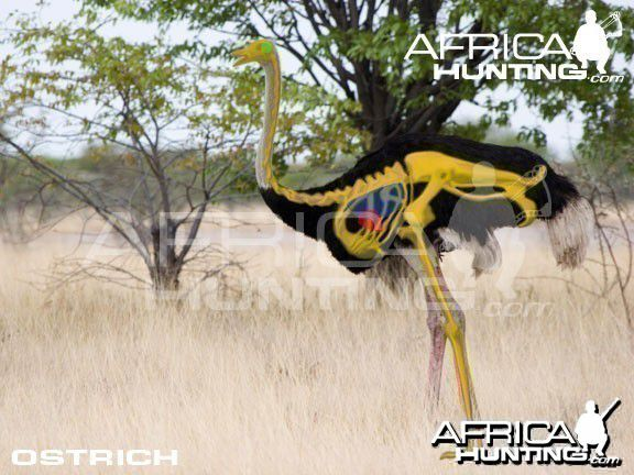 Grands gibiers africains