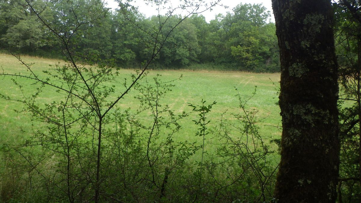 Chevreuils et renards lotois, merci Thierry, 11 et 12 juillet