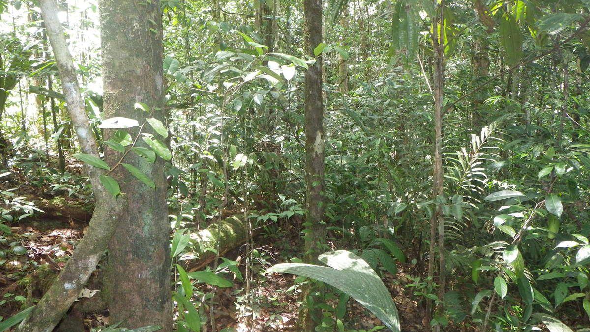 Chronique guyanaise, Une chasse en forêt difficile, 9 mars 2016