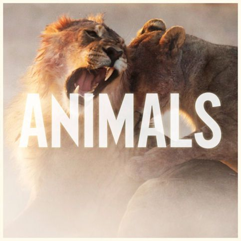 MAROON 5 « Animals »