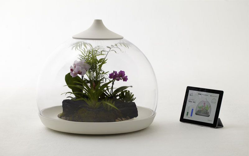 comment faire un terrarium pour vos plantes l 39 ours comtois. Black Bedroom Furniture Sets. Home Design Ideas