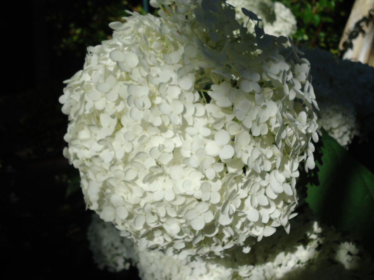 Le Clos Fleuri en juillet .....