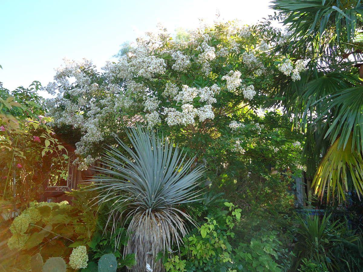 ~~Il faut continuer à rabattre  les vivaces après la floraison ...
