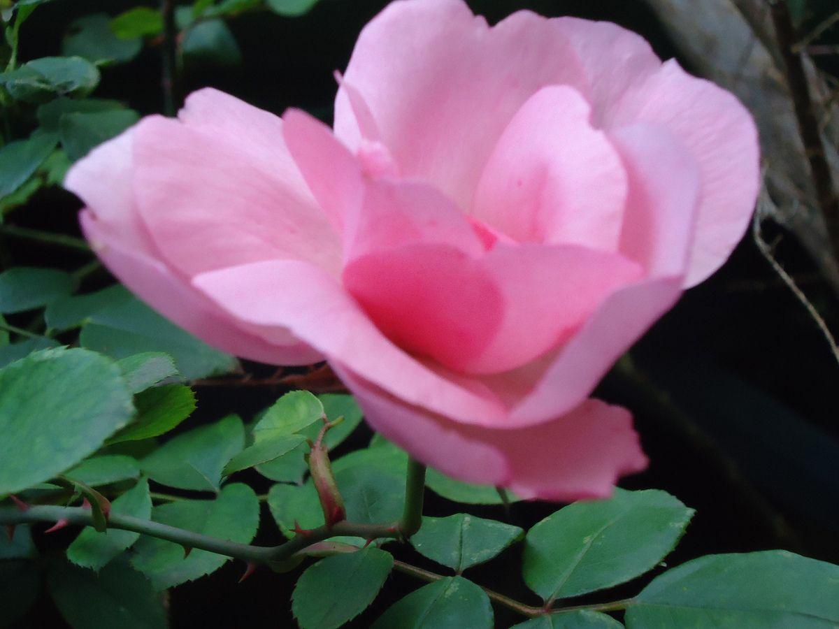 Le Clos Fleuri : à visiter. Informations pratiques