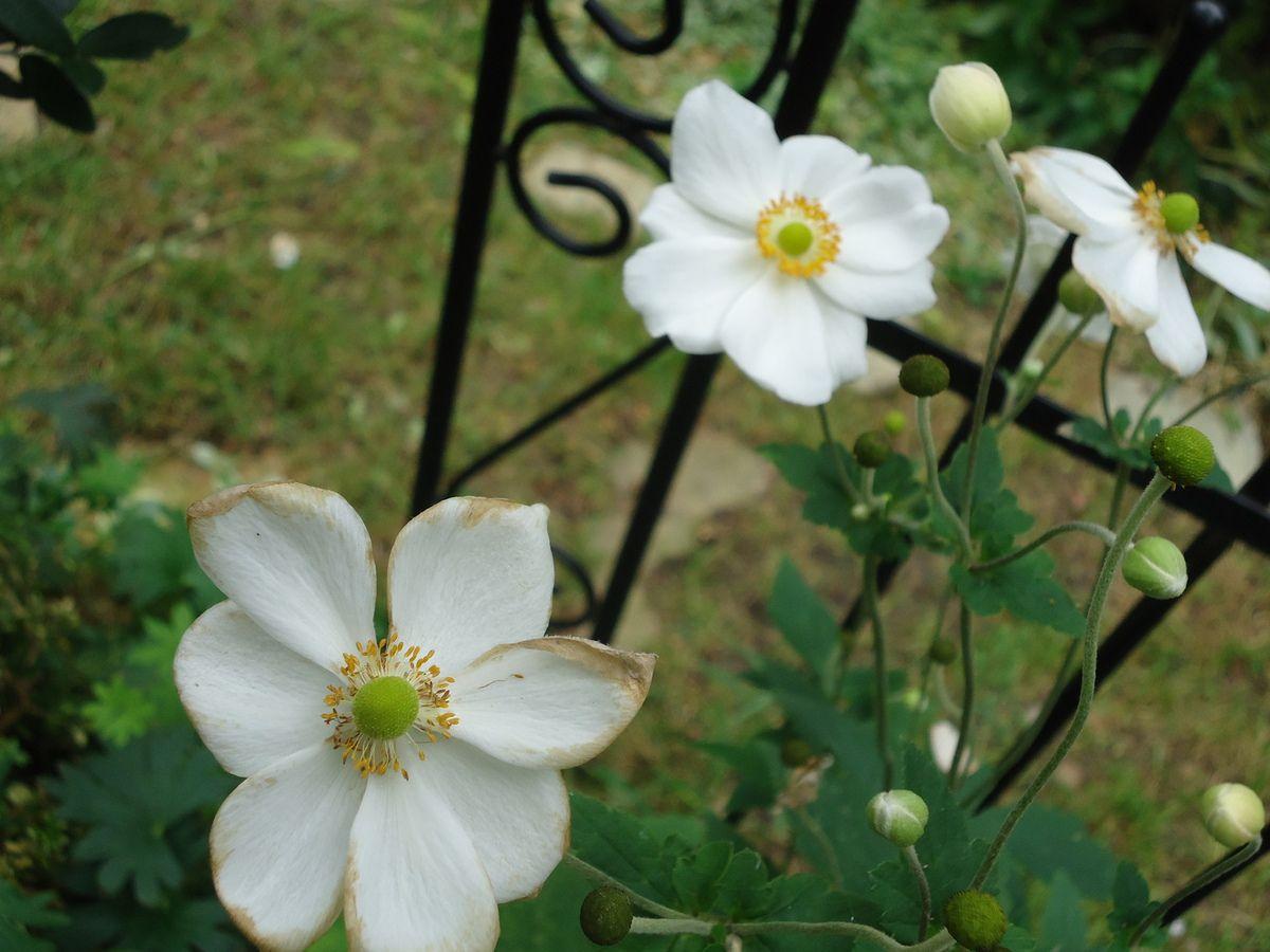 Liste de beaux jardins à visiter en Rhône-Alpes...