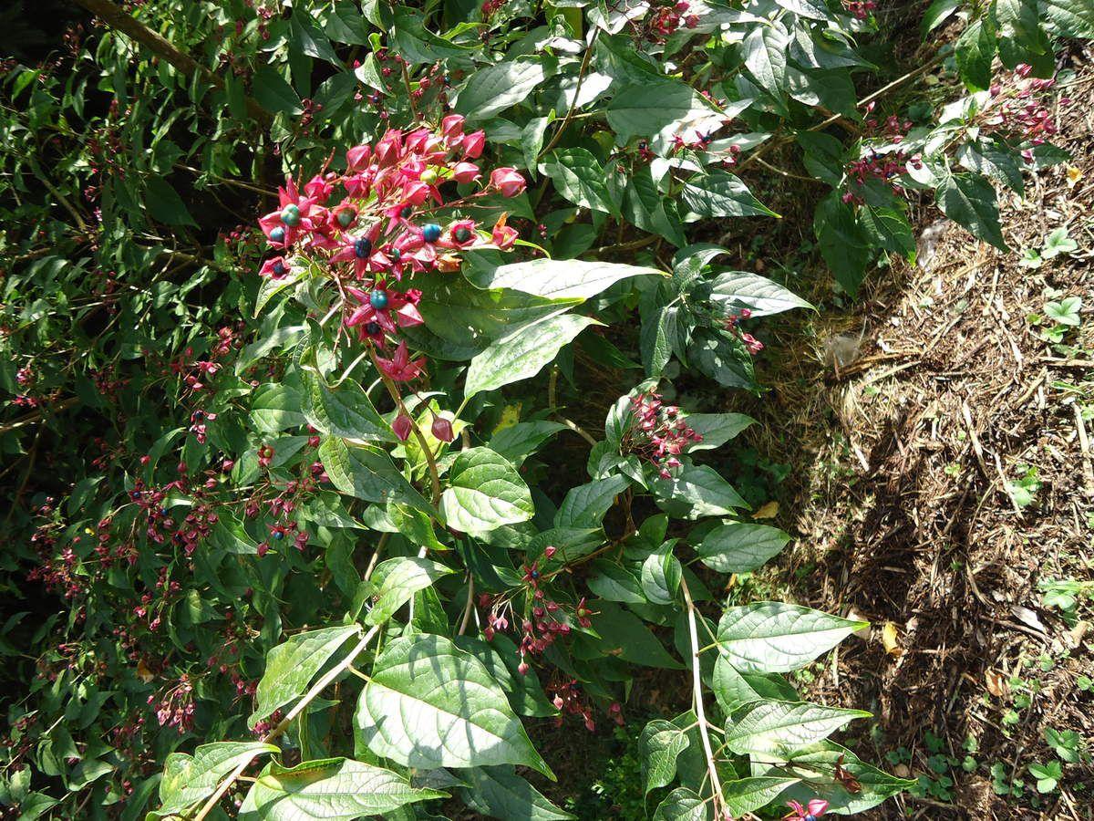 Haute Savoie:jardin des plantes autonomes....(2014)