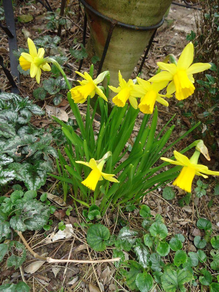 Le printemps c'est aujourd'hui .....