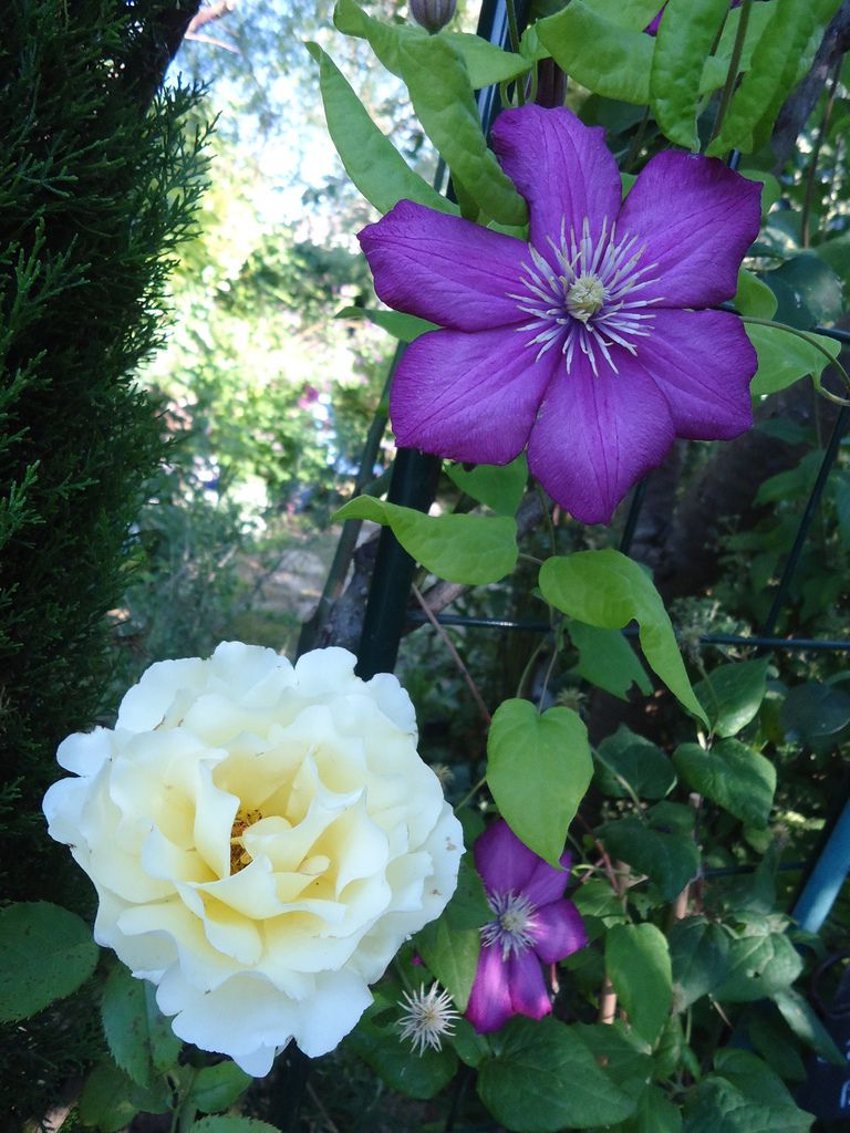 Mon Clos fleuri en juillet 2015