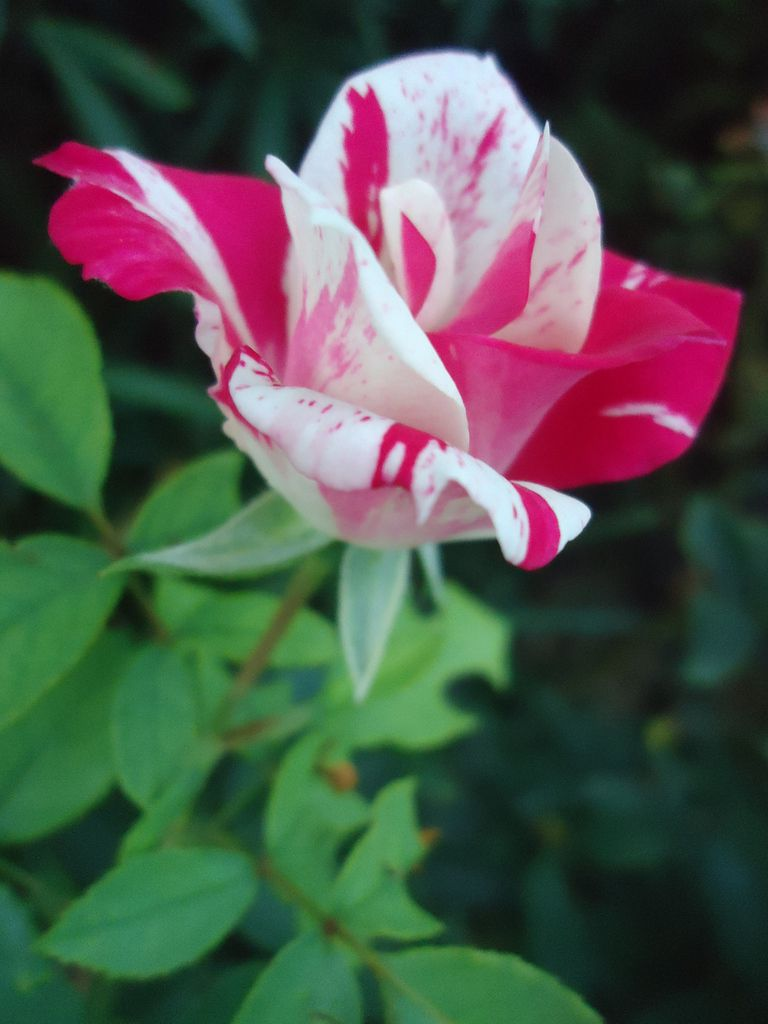 Le Clos Fleuri en septembre 2015