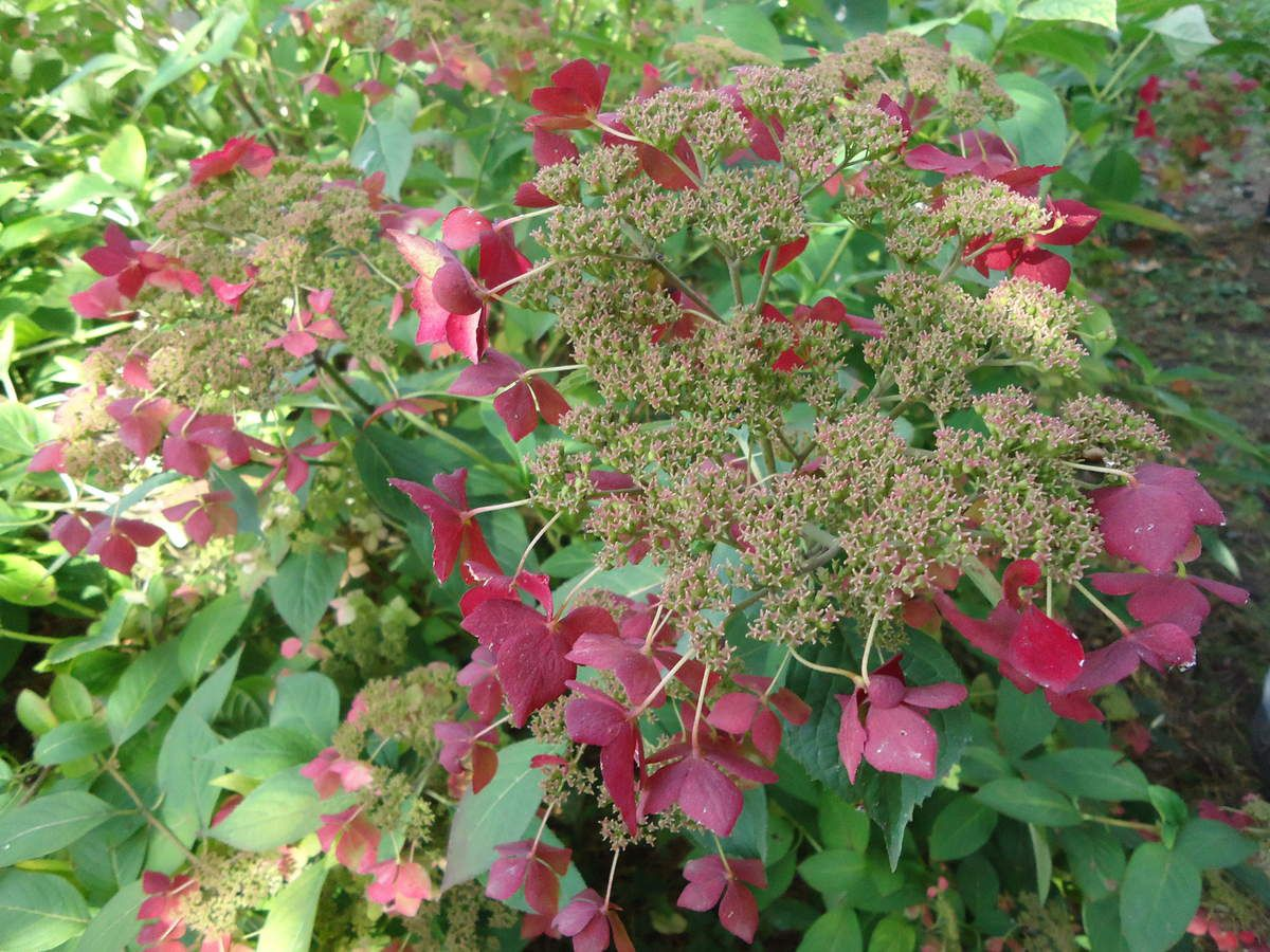 Mes sorties jardins : La Bourgogne.... Le jardin de ma mère....