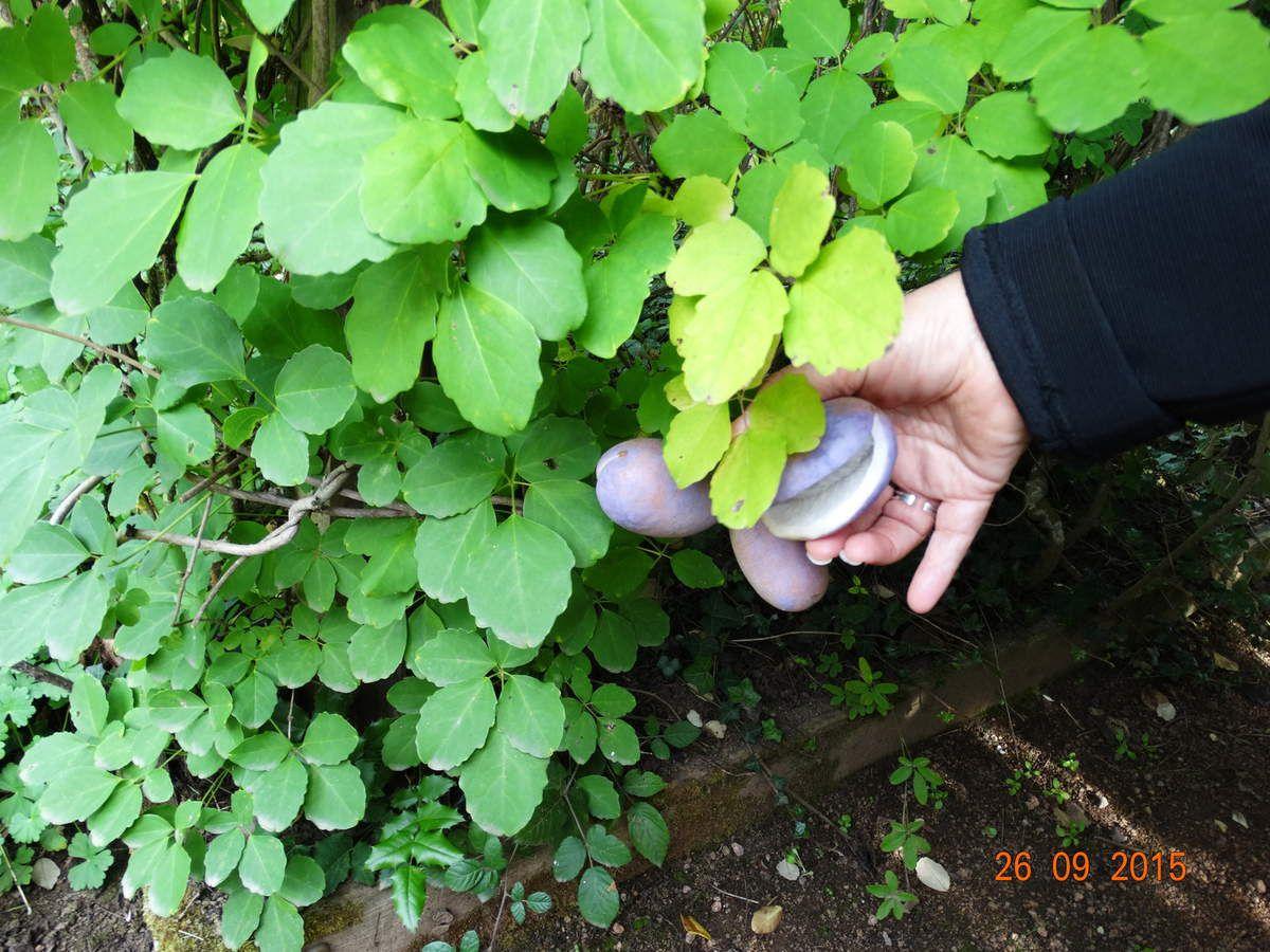 Mes sorties jardins :La Bourgogne , Le jardin du Phénix