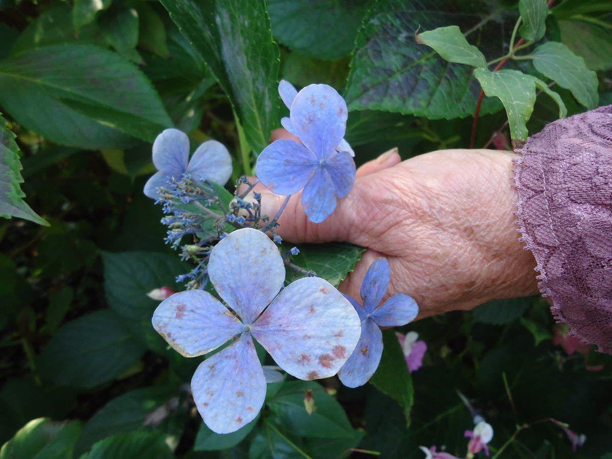 Mes sorties jardins : la Bourgogne ,le jardin des sources ....