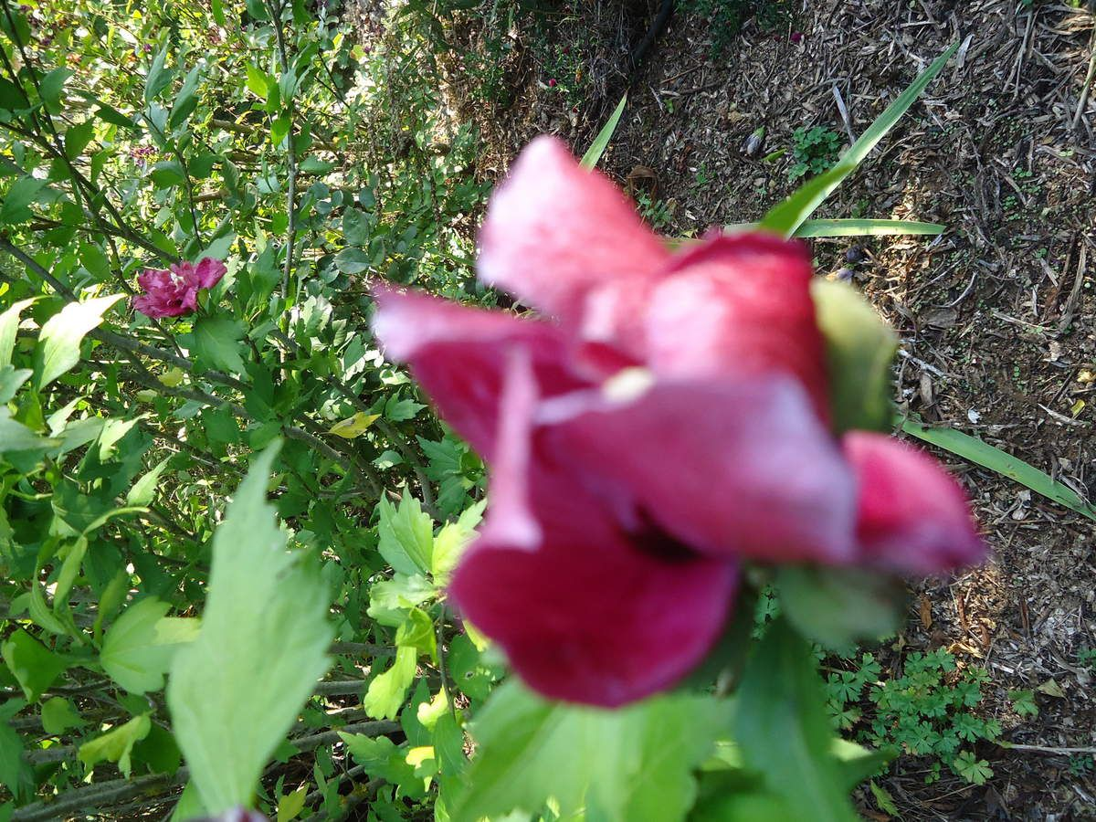 Mes sorties jardins : la Bourgogne ,le jardin de Cassandra ....
