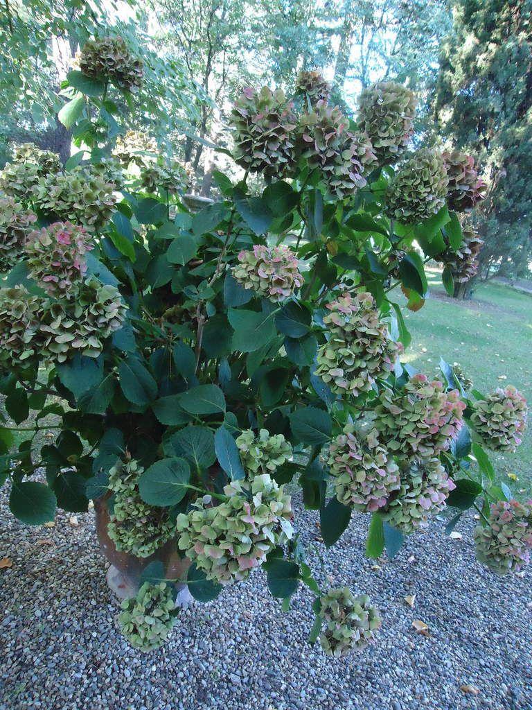 Ma Sortie Jardins Aix En Provence Les Jardins De