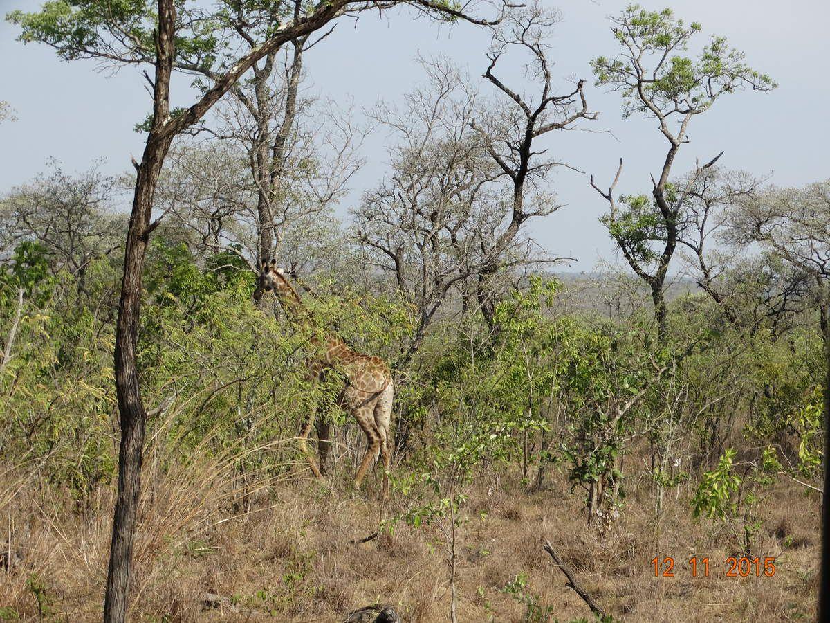Mon voyage en Afrique : 9e jour .  Nov. 2015