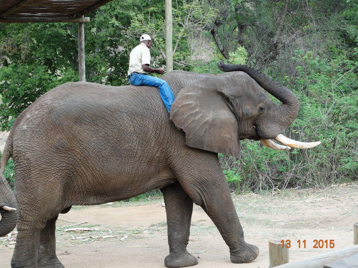 Une très belle rencontre avec les éléphants à Elephant Whispers.