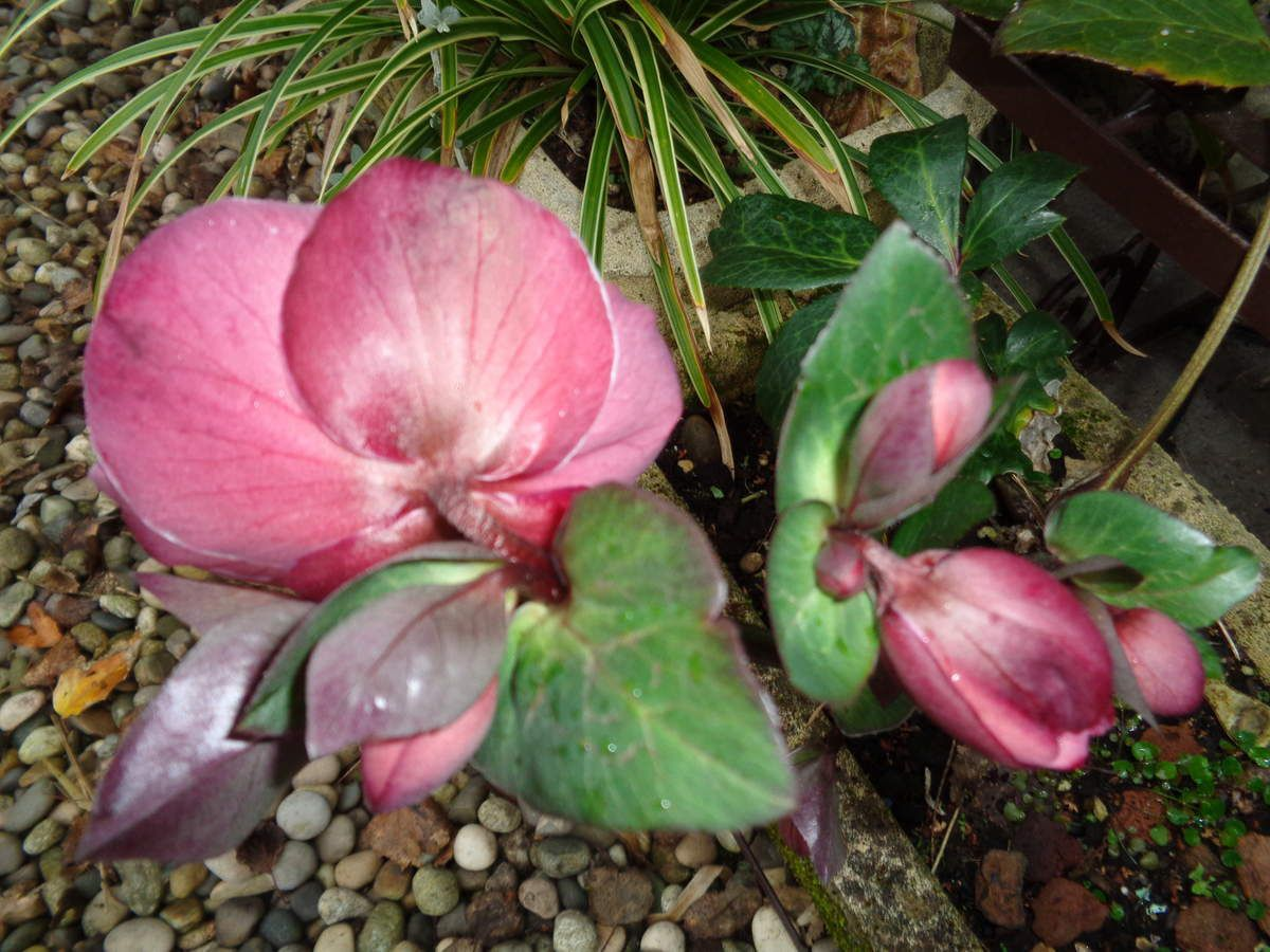 """Les photos de mon jardin """" Le Clos Fleuri """" prises en février"""