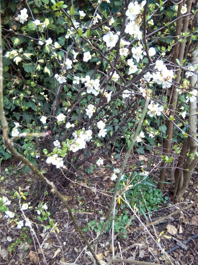 Le Clos Fleuri en mars  2016 ......