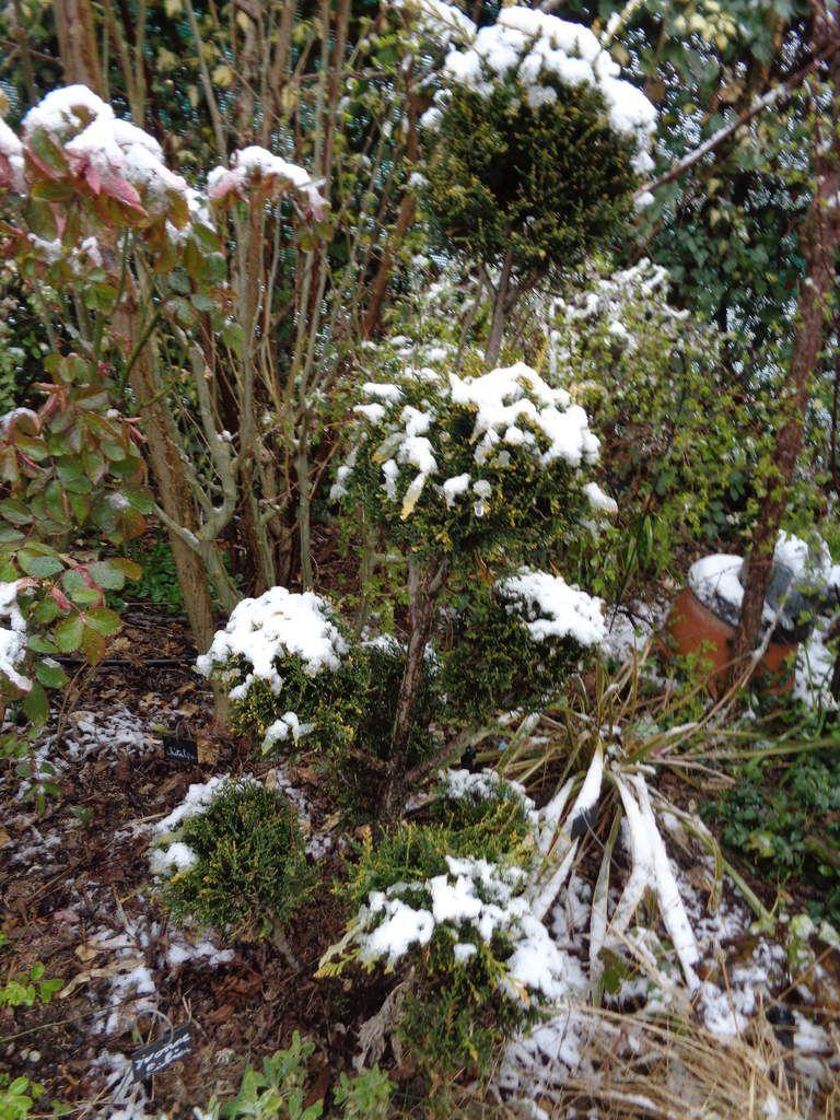 Il neige au Clos Fleuri à Chabeuil ...