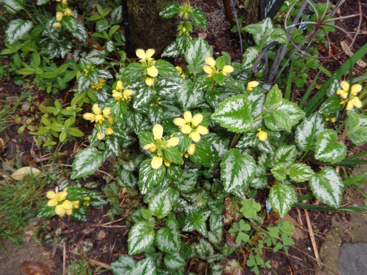 Mon jardin Le Clos Fleuri en Avril ....