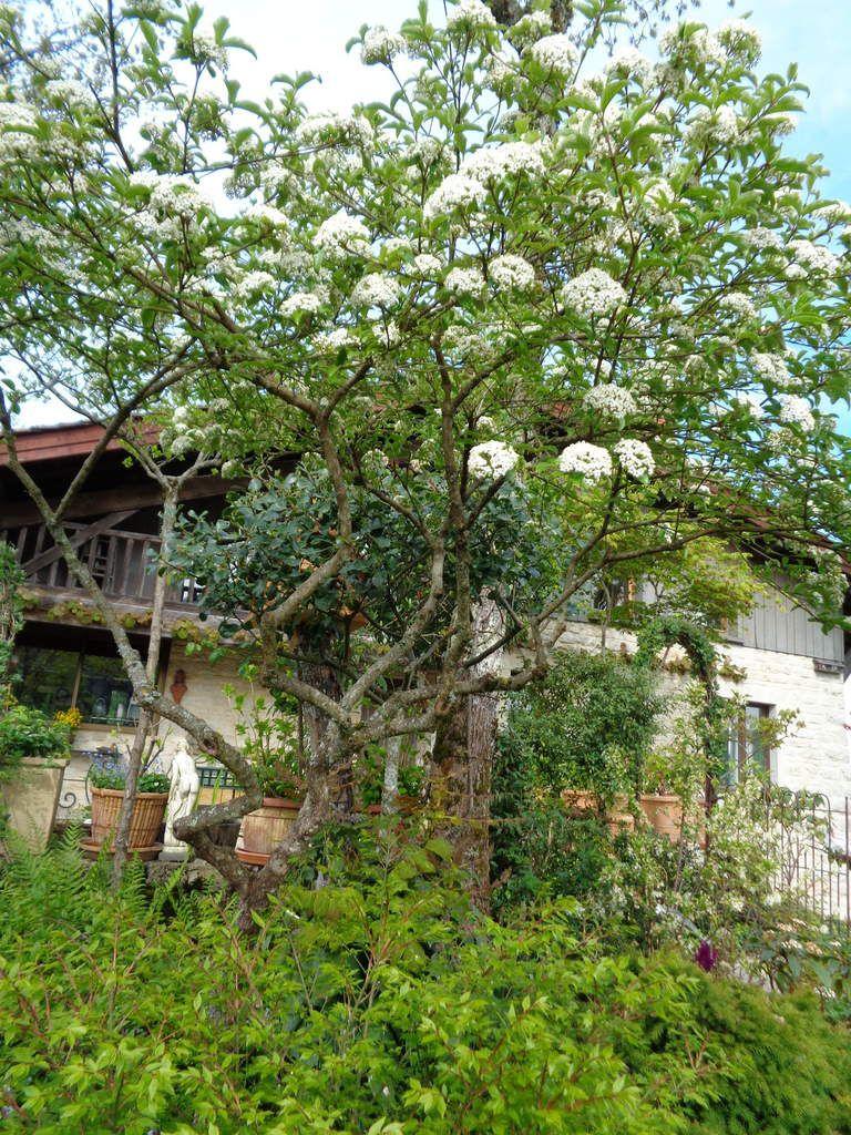 Le jardin  d'André Gayraud dans l'Ain