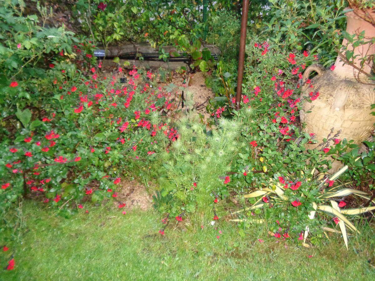 Les photos récentes prises dans mon jardin