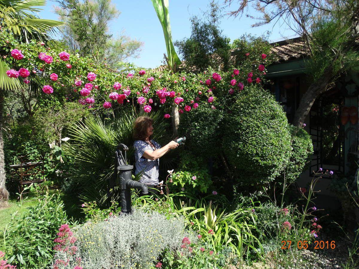 Les photos récentes prises dans mon jardin .......