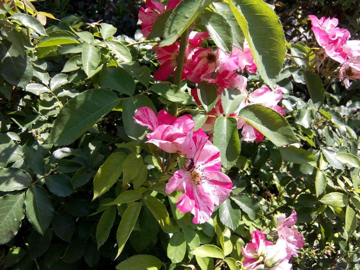 Mon jardin Le Clos Fleuri en juillet .....