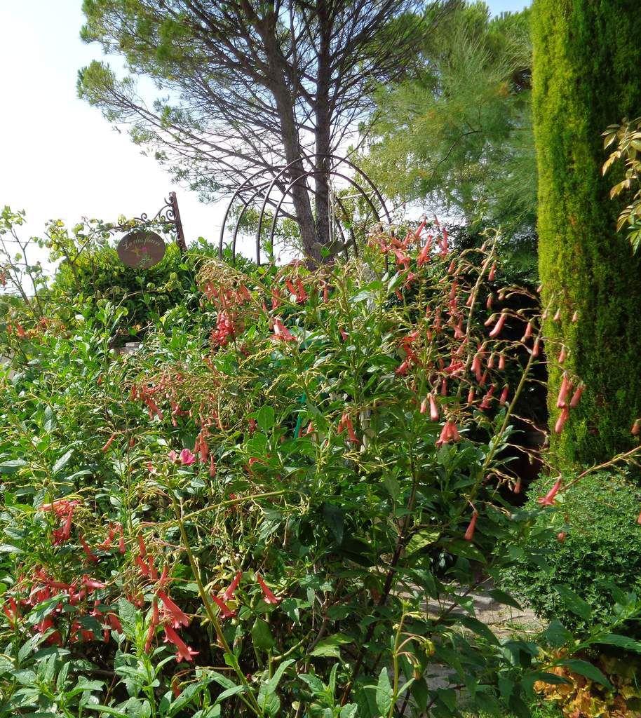 Toutes les photos sont de mon jardin ,prises ce matin .....