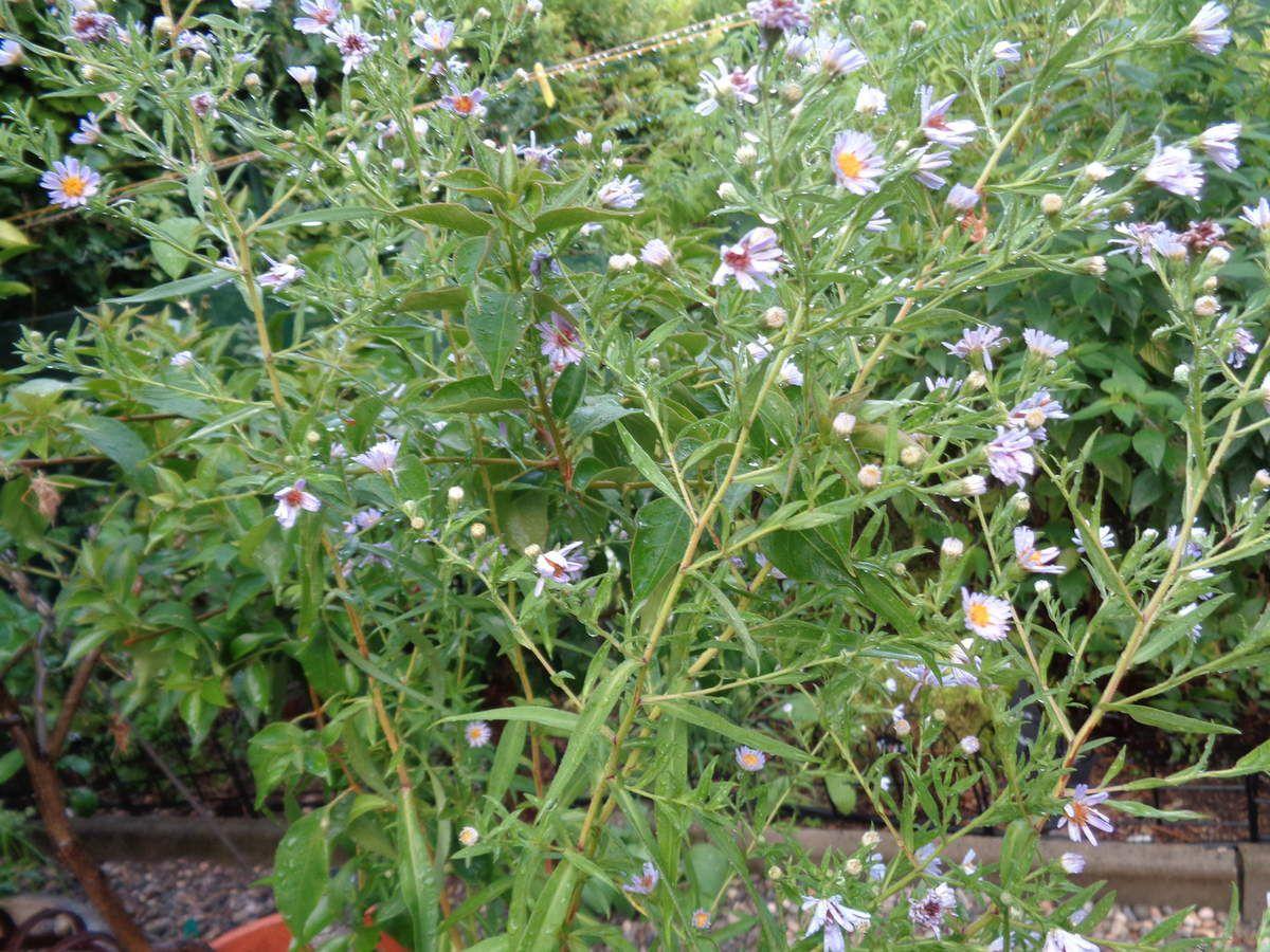 Toutes les photos sont de moi ,de mon jardin en ce moment ...J'ai trouvés les gifs animés sur le net ....