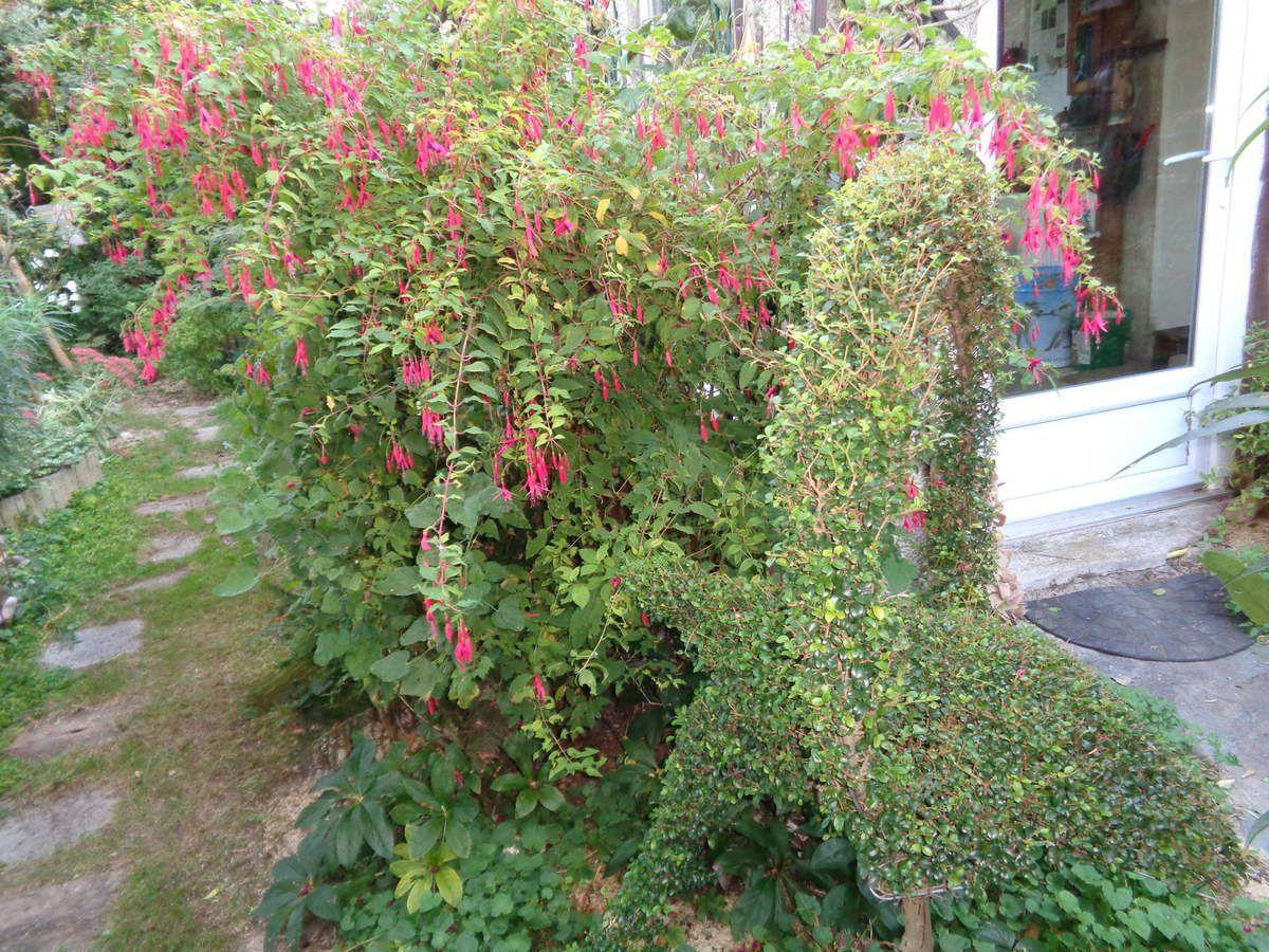 Mon jardin Le Clos Fleuri en octobre ....