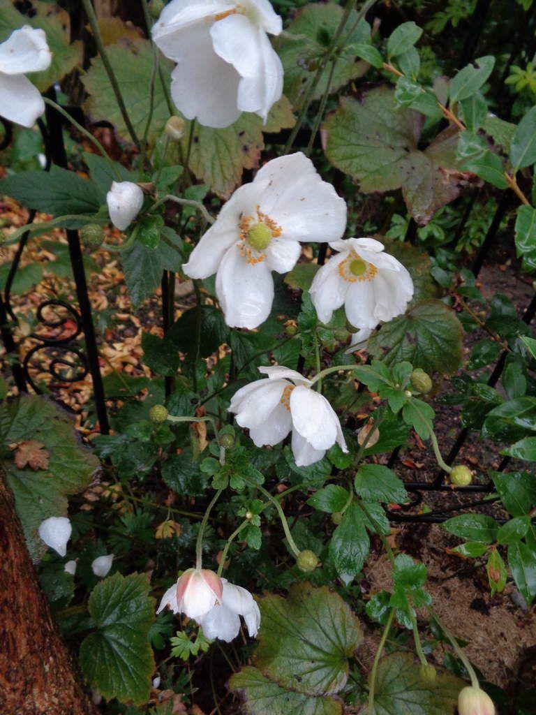 Le Clos fleuri en novembre .....