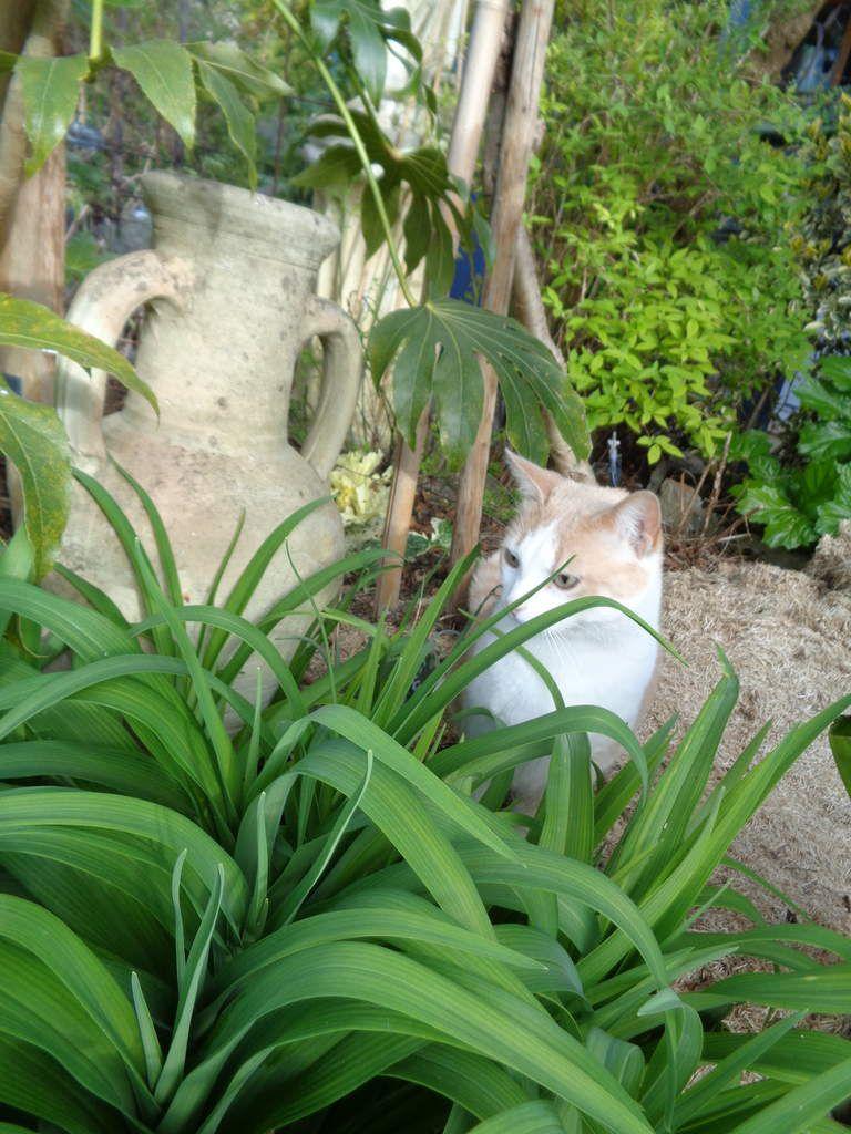 Toutes les photos sont de moi prises dans mon jardin ......