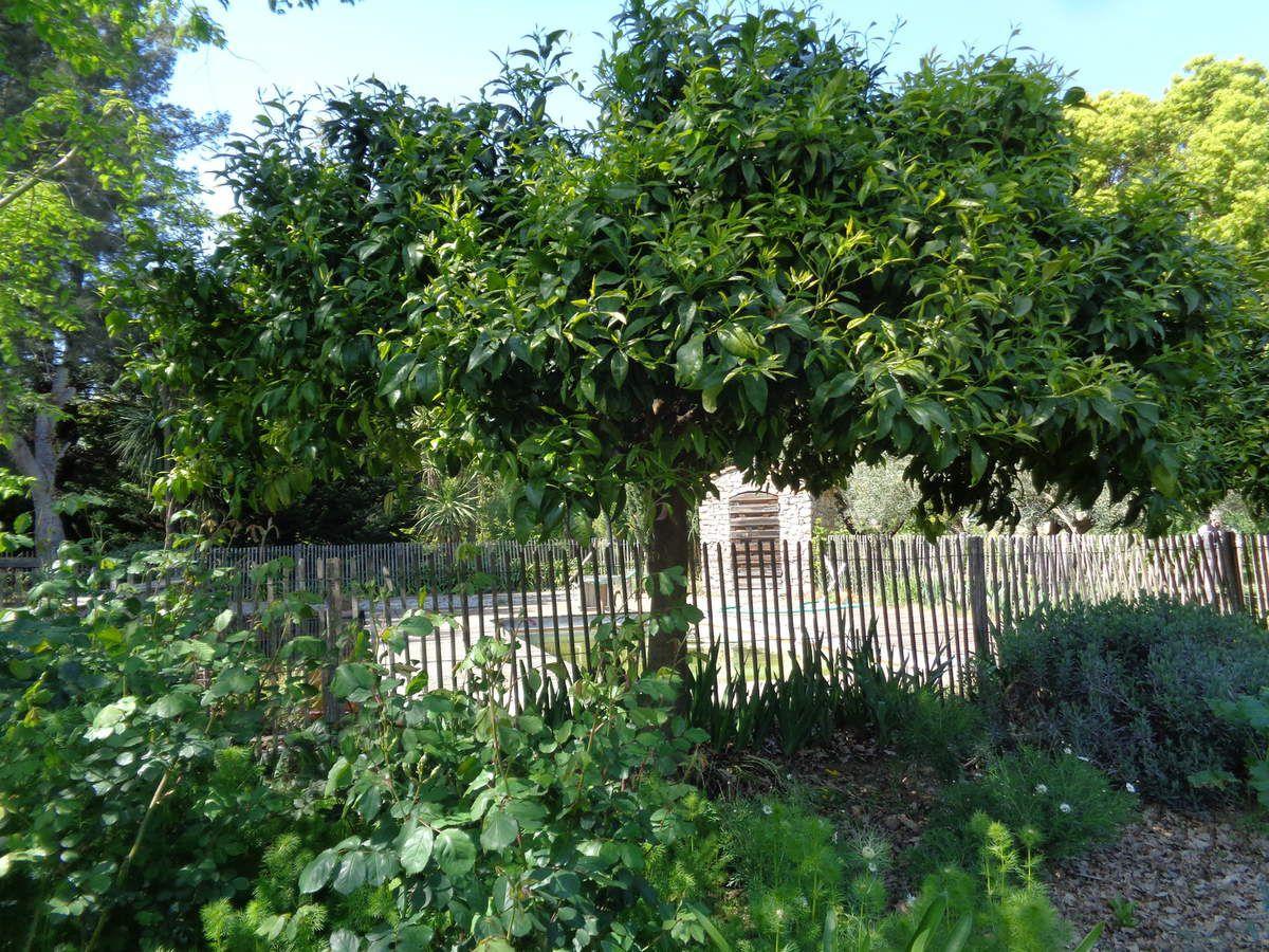 Photos prises par moi même  dans le magnifique  jardin privé de Gérard et Monique Borgetto