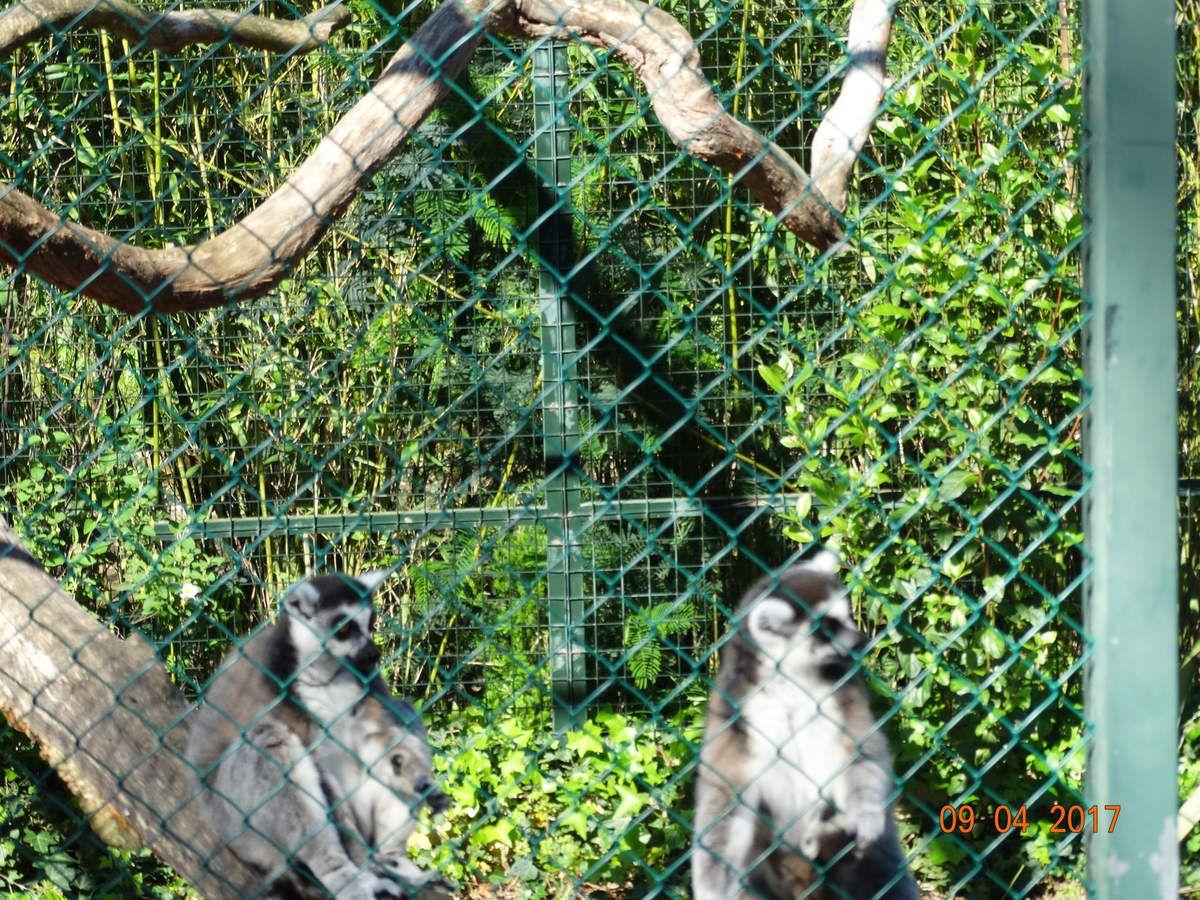 Mon voyage dans le Var :jardin zoologique tropical