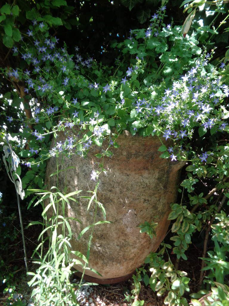 Le jardin Le Clos fleuri en juin