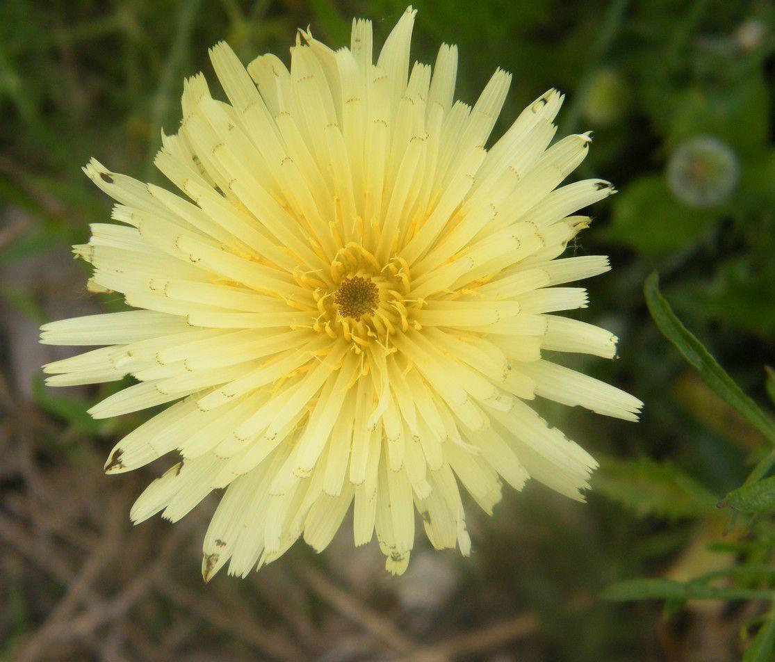 lors d'une promenade quelques fleurs m'ont fait un clin d'oeil !