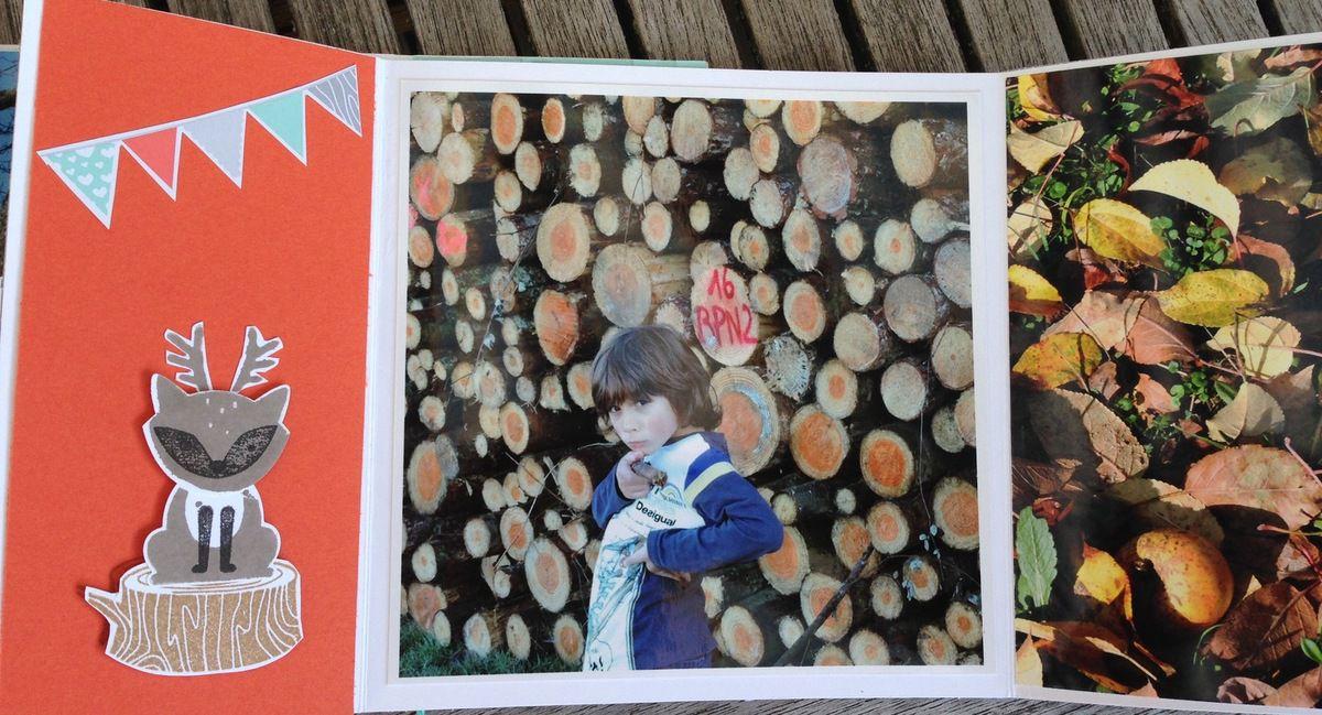 Album &quot&#x3B;dans les bois &quot&#x3B;