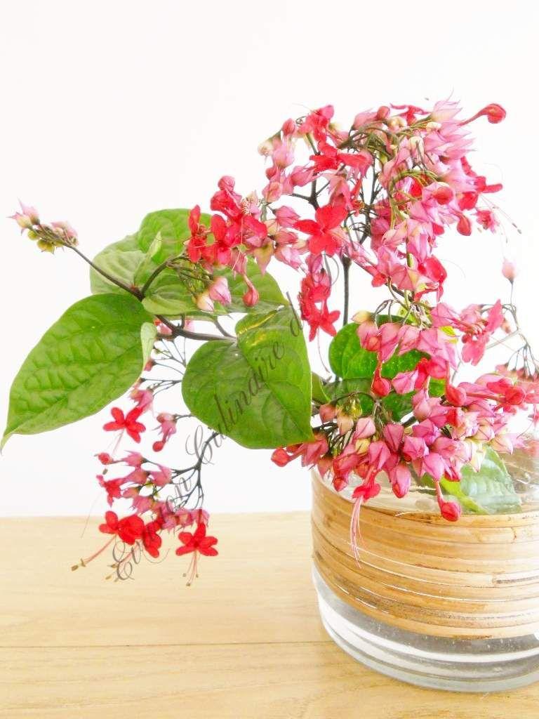 Que de Belles Fleurs !!