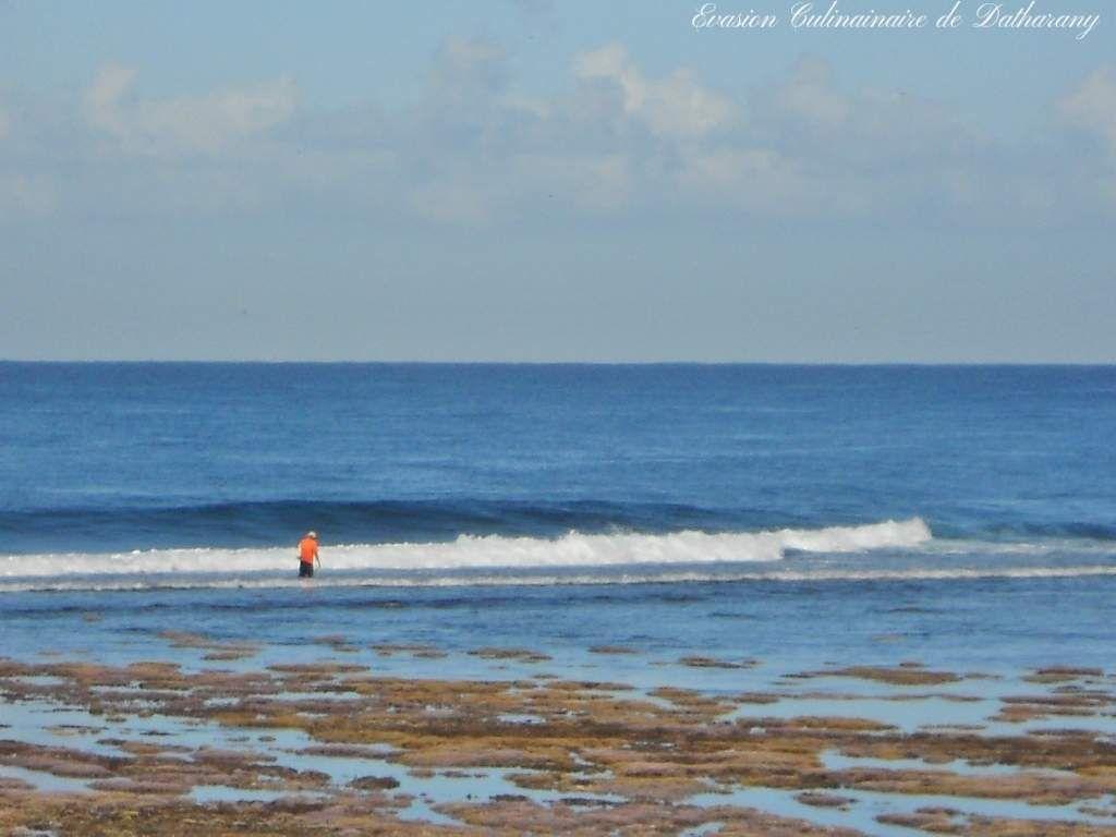 Marée Basse &amp&#x3B; Pêche à Pied