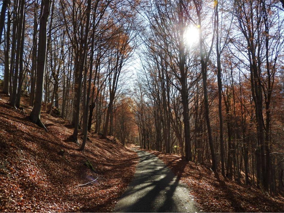 Route de Planchette