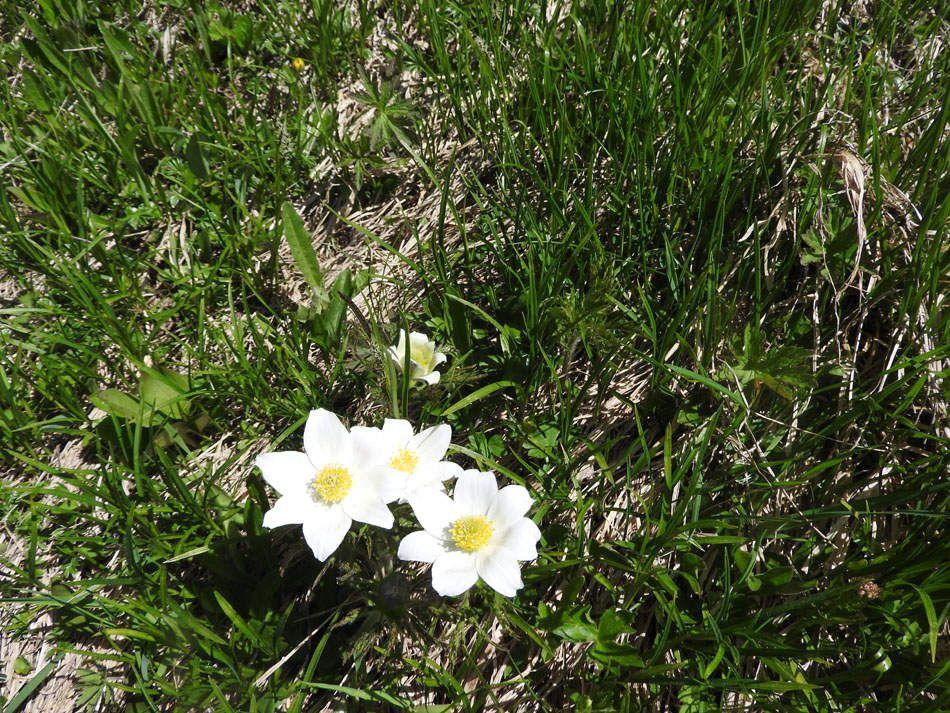 Les fleurs rencontrées... A vous de tester vos connaissances.....