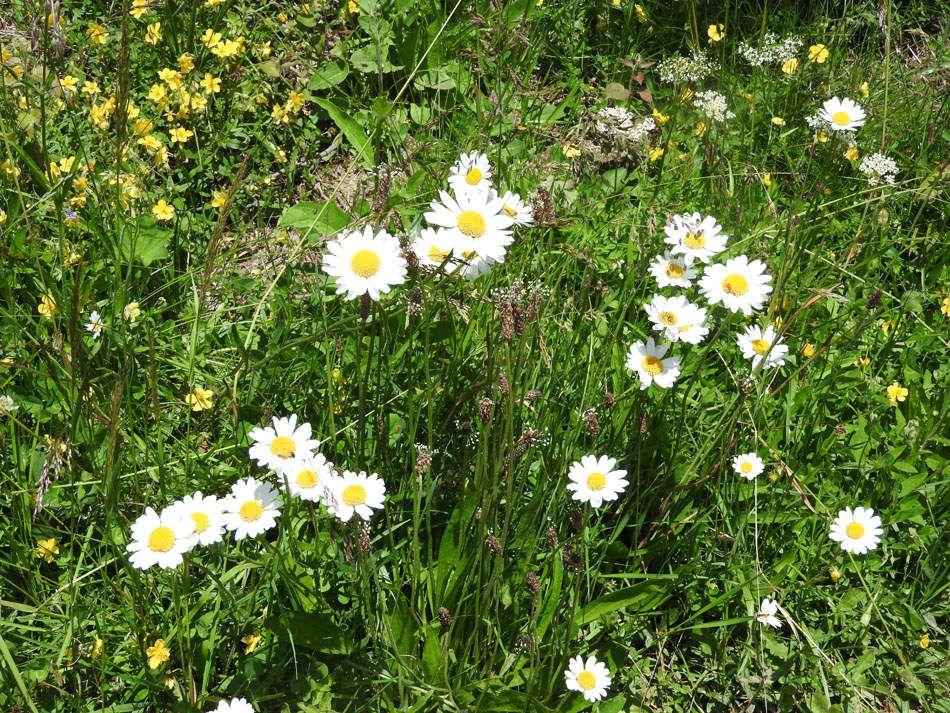 La flore rencontrée : une explosion de couleurs et d'odeurs!