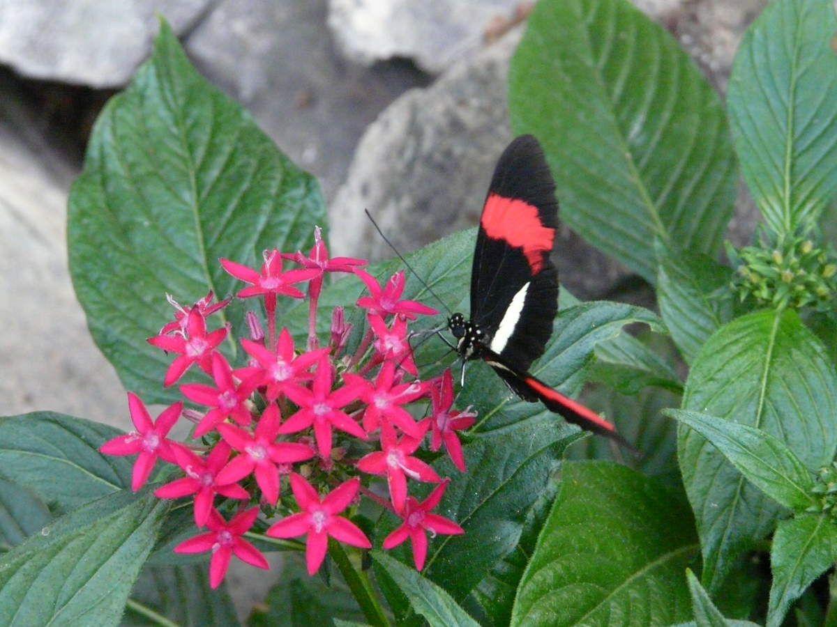 Le temps est pluvieux? une idée de sortie: Le jardin des papillons à Hunawihr